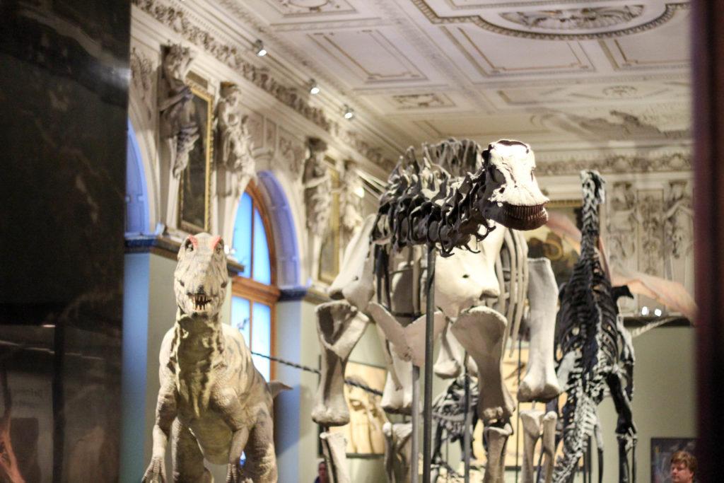 ウィーン自然史博物館の恐竜骨格
